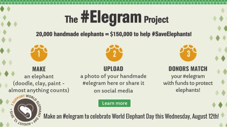 elegram_project