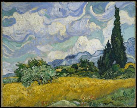 field-with-cypresses